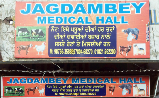 Jagdambay Medical Hall